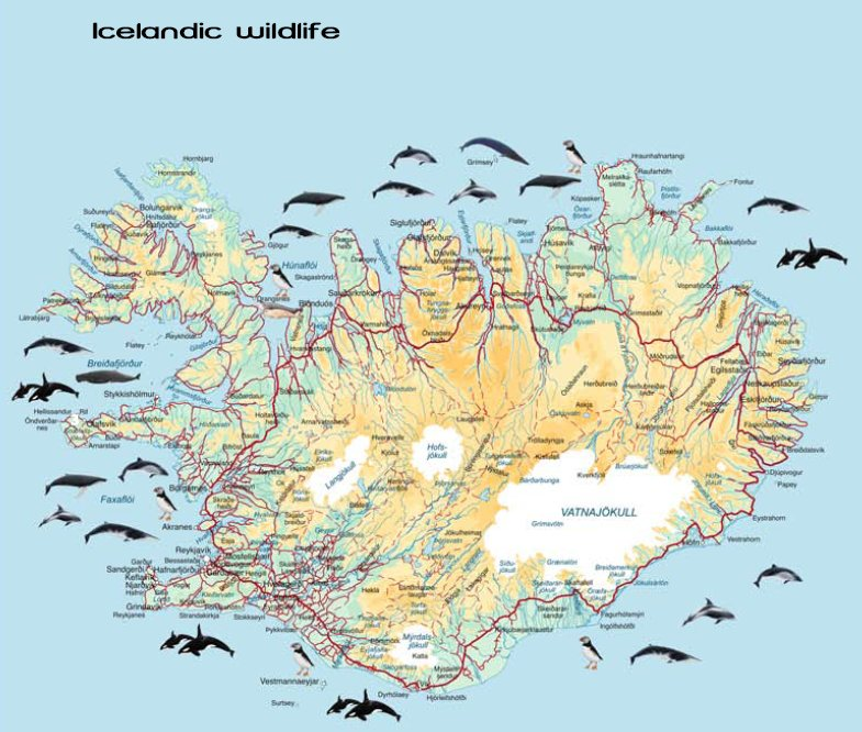 All the whales you can see around Iceland