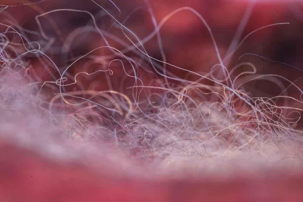 Lopi fibers up close.