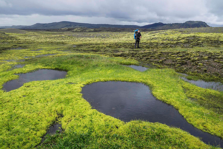 Very green moss