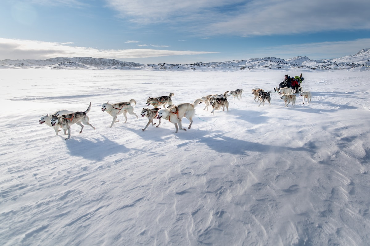 Dogsledding with husky dogs in Greenland in Winter