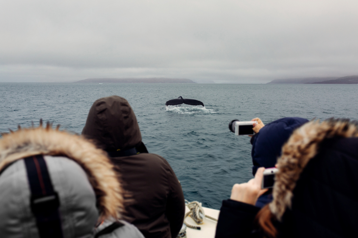 Whale-spotting